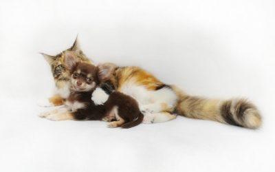 Molkereiniger – tierisch gut für Hund und Katze